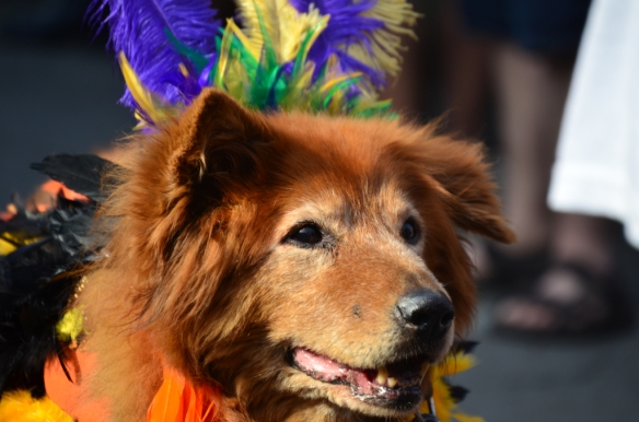 Krewe of Barkus 2013 in New Orleans