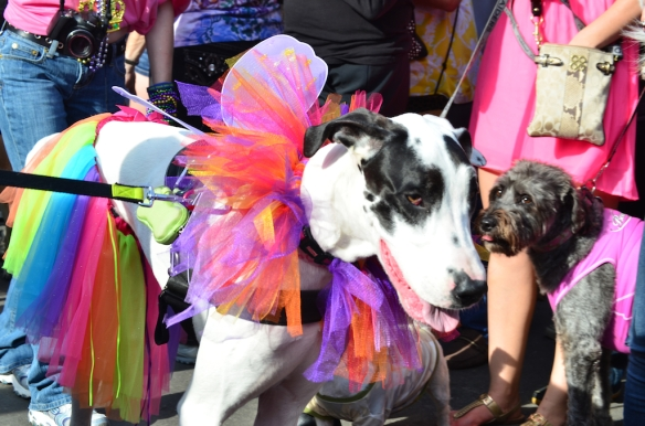 Krewe of Barkus 2013 in the French Quarter.