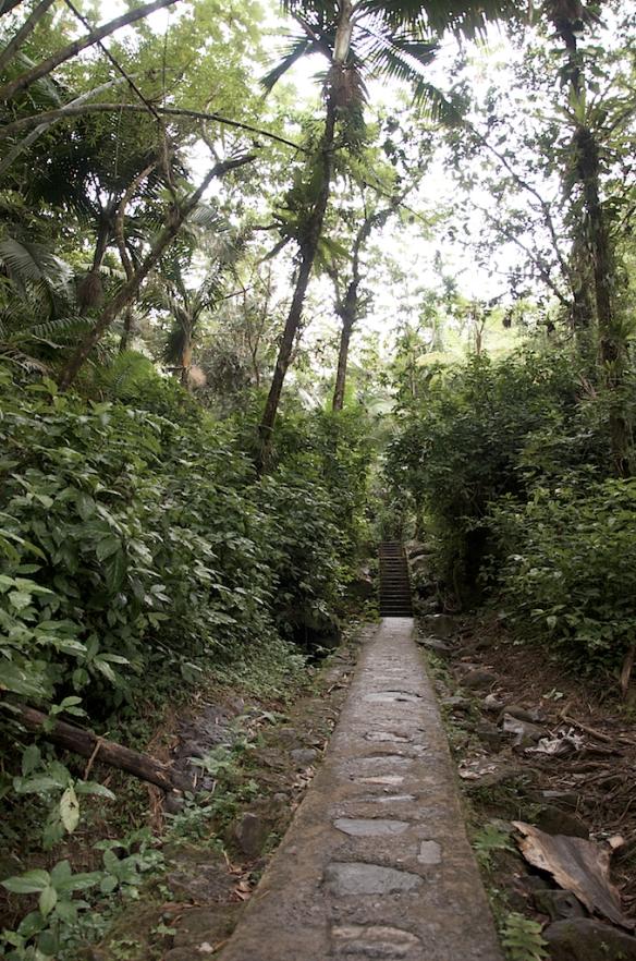 El Yunke Rain Forest, Puerto Rico