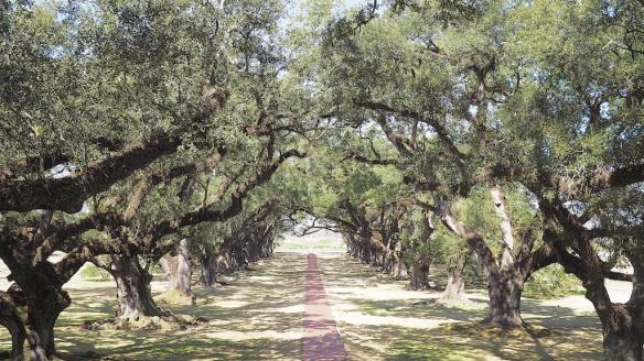 Oak Alley Plantation, Louisinana